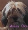 Cucciolata 2017 MAMMA CHICA